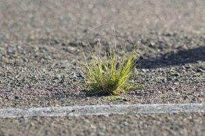 コンクリートと雑草